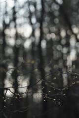 spring mood (Vadim Beldiy) Tags: nature naturebynikon nationalgeographic ngc ngs beautiful extremebokeh bokeh 135mm jupiter37 jupiter37a vadimbeldy vadimbeldiy tree trees forest wood springtime spring nikon nikond600 manualfocus manuallens ussrlens юпитер37а юпитер37 мсюпитер37а вадимбельдий бельдийвадим photography elitephotography wallpaper