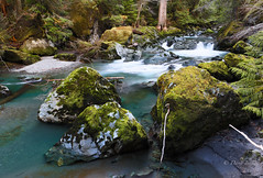 Rainforest river (D. Inscho) Tags: duckabushriver pacificnorthwest brotherswilderness longexposure polarizingfilter moss washington olympics oldgrowth