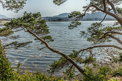 Sea-dipping pines at Inverewe Gardens, Loch Ewe, Poolewe. (Scotland by NJC.) Tags: coastline 海岸线 litoral côte küste linea costiera 海岸線 해안선 seashore coast shore seaboard seaside beach strand hill تَلّ colina 小山 brdo kopec bakke forhøjning landskabet heuvel mäki colline hügel λόφοσ collina 丘 언덕 ås wzgórze deal холм backe เขาเตี้ยๆ tepe coğrafya пагорб đồi trees foliage vegetation arboretum شَجَرَة árvore 树 drvo strom træ boom árbol puu arbre baum δέντρο albero 木 나무 northwesthighlands westerross scotland
