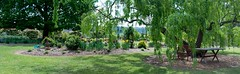 Garden Andrews G9 _Panorama 2637_40.jpg (st peters gardens armidale) Tags: 2018 willow plants australia gardenart gardenweekend salicaceae towngarden northerntablelands newengland urallashire eudicot stpeters events places flowering furniture church nature magnoliophyta phanerogamae garden magnolopsida plant seat flora salix malpighiales plantae leecerd gardenview nsw angiospermae uralla gardenweekendflickr dicot
