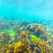 St Leonards Pier Underwater-30