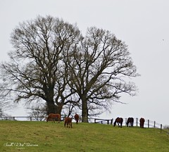 Domaine de Garenne (South West Unicorn Photography) Tags: nature chevaux normandie