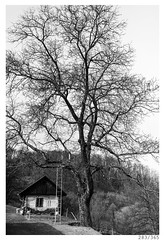 A house, a tree and the ladder (Aljaž Anžič Tuna) Tags: house tree ladder nature old photo365 project365 panorama onephotoaday onceaday 365 35mm 365challenge 365project nikkor nikond800 nice naturallight nikon nikkor28mm 28mm 28mmf28 f28 wide wideangle dailyphoto d800 day bw blackandwhite black white blackwhite beautiful