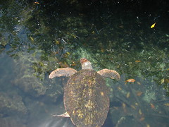 2010-07-12_13-48-16_DSC-H2_DSC01221 (Miguel Discart (Photos Vrac)) Tags: xcaret 2010 mexique animaux vacance dsch2 holiday iso80 mexico sony sonydsch2 travel vacances voyage