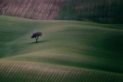Albero solitario (Michele Fini) Tags: albero paesaggio puglia campo grano onde verde