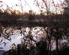 2017-11-19 (Mark & Naomi Iliff) Tags: river thames caversham sunrise dawn wind rain leaves