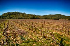 Vignes du Cru Classé Côtes de Provence en Hiver (GerardMarsol) Tags: france var vignes soleil sud sudest ciel couleurs cepdevigne laclapière cruclassé