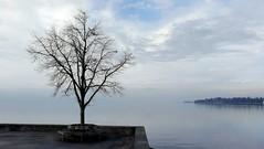 Winter am Bodensee (Yohtine) Tags: winter bodensee blakekonstanz baum ufer hiver see wasser eau lindau lacdeconstance himmel ciel wolken sky