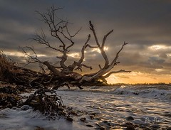 Stormy sunset (Peter H 01) Tags: windy winter harbour langstone surf trees waves sunset