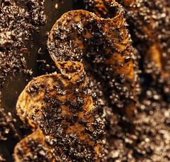 Filtered Grounds_Macro Mondays (brucekester@sbcglobal.net) Tags: macromondays brew coffee coffeegrounds filter