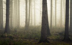 Winter Fog (Netsrak) Tags: baum bäume eu eifel europa europe forst landschaft natur nebel rheinland rhineland wald fog forest mist nature trees winter woods outdoor