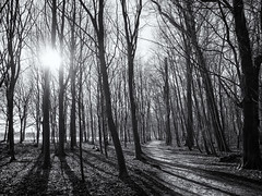 Tegen de zon in (Paul Beentjes) Tags: nederland netherlands bos forest bomen trees backlight tegenlicht shadows schaduwen pad path