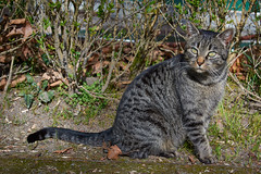 DSC_0781 1 (María Parra Photography) Tags: gata gato cat felino animal animales fauna