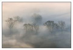 Hope Valley Mist 4 (shaunyoung365) Tags: peakdistrict mist fog trees sonya7riii landscape uk