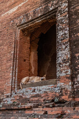 time for a nap (David Mulder) Tags: bagan myanmar burma myanmarburma iso31662mm