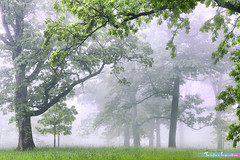 A Brand New Day *A Beautiful Nature* (iLOVEnature's Photography Inspiration) Tags: abrandnewday abeautifulnature tree trees themortonarboretum morning sunrise fog foggy mist misty forestreserved nature landscape macro lisle illinois chicago us usa green