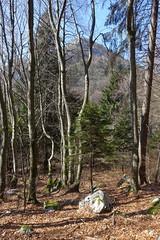 Hike to Mont Baret (*_*) Tags: sunny europe france hautesavoie 74 annecy savoie march 2019 spring printemps nature mountain hiking montagne randonnée trail marche walk bornes montbaret