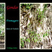 racines de fromager© Bains de Fasiladas