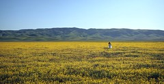As far as you can see (PeterThoeny) Tags: carrizoplain carrizoplainnationalmonument california usa nationalpark park field pasture flowers bloom superbloom californiasuperbloom yellow woman dress white whitedress fabric lining landscape sky outdoor clear day sony a7 a7ii a7mii alpha7mii ilce7m2 fullframe fe2870mmf3556oss 1xp raw photomatix hdr qualityhdr qualityhdrphotography fav100