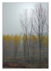 ... (claudiomantova1) Tags: color autunno landscape paesaggio alberi emotive sera alba