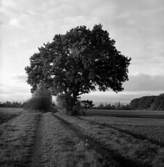 051118015 (salparadise666) Tags: nils volkmer rollei sl66 square medium slr format analogue film camera nature tree season hannover region niedersachsen germany black white monochrome