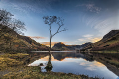 Lone Tree at Buttermere PP (petebristo) Tags: buttermere lakedristrict lakes lonetree reflections evening