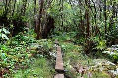 Kaua'i (joeksuey) Tags: puuokilalookout viewpoint kokee statepark hawaii island joeksuey napalicoast kalaluavalley piheatrail kauai alakai swamp trail kilohana lookout redcrested cardinal