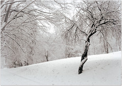 (eliška9) Tags: winter snow sníh zima inverno neve strom albero tree amanti lovers love amore nature natura