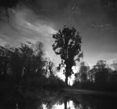 Surreality (massimosvestito) Tags: film filmisnotdead blackandwhite bw abstract surreal massimosvestito holga 120film ishootfilm toycamera 120 landscape bnw analog surreality