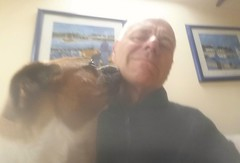 Reba giving me a kiss (andreboeni) Tags: reba boxer dog chien hund perros dogs chiens hunden selfie