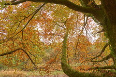 Autumn colors on the banks of the river Annan, October 2016 (imagesbyhmck) Tags: october 2016 autumn fall annan fineartamerica photo4me royaltyfree annanarea annandalesouth dumfriesandgalloway scotland unitedkingdom