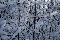 Bleu neige (André-Guy Robert) Tags: andréguyrobert andreguyrobert neige snow arbres trees contrejour backlighting