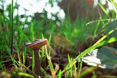 Le Petit Lactaire (Clém VDB ( Tiogris)) Tags: champignon seta fungus mushroom macro nature bois sousbois sunlight rayonsdesoleil