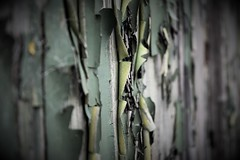 Old, peeling paint nearing the end. (Harry McGregor) Tags: paint peeling flaky crusty decay vignette weatheredwood sixwordstory harrymcgregor nikon d3300 9 february 2019 abstract texture patina