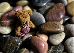 Tiny Bear On The Rocks... (angelakanner) Tags: smileonsaturday shadesofbrown canon 70d 50mm teddy bear rocks browns