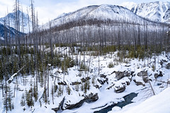Winter scene in Kootenay National Park with burned forest fire trees, the Kootenay River and Canadian Mountains, all covered in snow (m01229) Tags: rock nature dangerous icy bc lake destination kootenayriver trees national britishcolumbia scenic burnedtrees canada banffwindermerehighway stone kootenay landscape tourists snowpack canyon rocky rockymountains icyoutdoors sky travel morning rockies kootenaynationalpark mountains canadian rugged scenery snowpillows highway water hiking canadianrockies columbia british nationalpark tourism narrow mountain