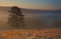 Just like a dream (bertie.carter.photography) Tags: ashdown forest tree trees mist fog valley landscape eastsussex uckfield crowborough mood dreamy