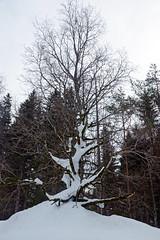 2019-02-10 Kufstein 106 Hintersteiner See