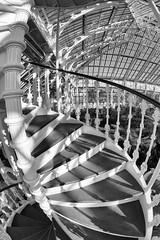 spiral fisheye (Francis Mansell) Tags: fisheye spiralstaircase staircase banister railing stairs temperatehouse building architecture glasshouse greenhouse monochrome blackwhite niksilverefexpro2 kew kewgardens royalbotanicgardenskew