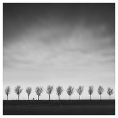 Dutch Polder - The lonely cyclist (Marco Maljaars) Tags: beemster dutch polder blackandwhite marcomaljaars dike monochrome minimalism sky mood landscape trees light bw netherlands bike racecyclist cyclist alone