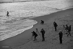 Wild photographers in their natural habitat (markjwyatt) Tags: fujifilmxt2 fujinon18155mmzoom monochrome manhattanbeach california photographers tripod camera people ocean surf sand