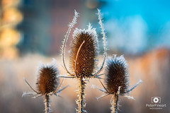 Ice frosting (PeterFineart) Tags: cold ice winter frost snow snowflakes morning nature naturelovers nikon nikonistas landscape bokeh blue sky sunny iceland roztoky praha prague praga moody colours colourful