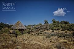 (garfie76) Tags: ethiopie africa landscape animal donkey nature hut blue sky bush
