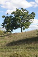 IMG_0911 (butterflykate19881) Tags: tree 2012 eastmanvillefarm