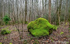 The Leprechaun Rock (Dave Reasons) Tags: woodland trees rock rain lichens leprechaun greenbriarcove green greatsmokymtnsnationalpark gatlinburg tennessee unitedstatesofamerica us