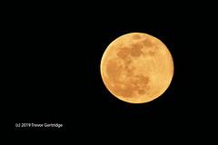 Super Snow Moon 2019 (Trevdog67) Tags: supermoon snowmoon supersnowmoon fullmoon february 2019 moncton newbrunswick nouveaubrunswick astronomy moon winter nikon sigma nikond7500 sigma150600mm contemporary