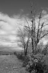 lot (serjinta) Tags: noirblanc white blackandwhite arbres lot france hiver