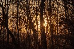 Sonnenuntergang / Sunset (reipa59) Tags: sonne sun sunset sonnenuntergang winter abendrot bäume countryside nature nordpfalz sunbeams wood zweige rhinelandpalatinate tree stahlbergerwald shadow sunrays baum schatten lichter licht abends illuminated rural forrest natur abendsonne roadtrip ast waldrand gegenlicht germany winterlandschaft light wintertag nordpfälzer pfalz wald stahlberg northpalatinate rheinlandpfalz scenery forestroad wintersonne palatinate illumination
