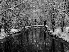 Winter in Bavaria (Lumen Candela) Tags: seebach ismaning bavaria bayern germany deutschland fluss river schnee snow winter trees wood bäume wald