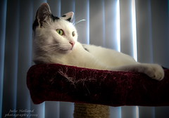 Toby (Julie Holland photography) Tags: feline g1x canong1x powershotg1x pointandshoot